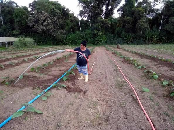 Rejane Plantação